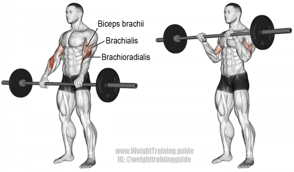 Barbell-Reverse-Curl-990x581