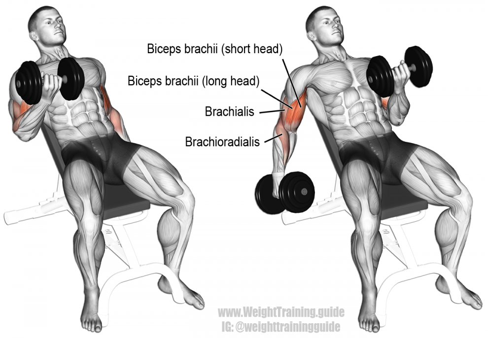Incline-Dumbbell-Curl-990x686
