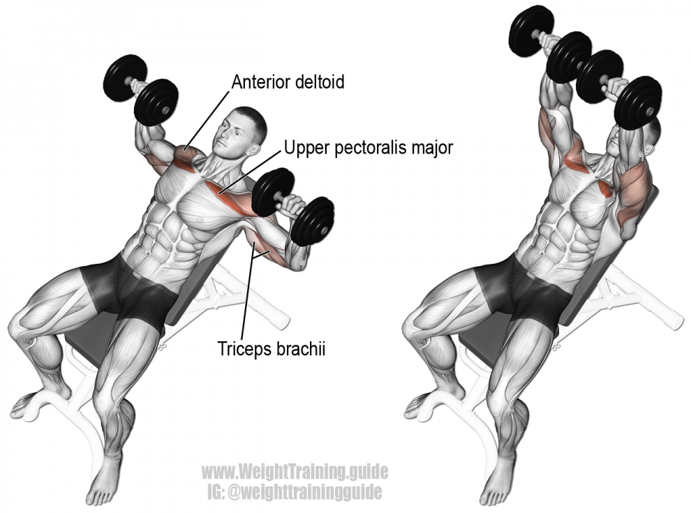incline-dumbbell-bench-press-990x735