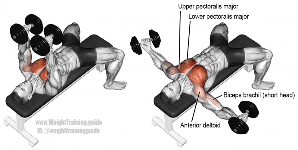 dumbbell-chest-fly-990x500