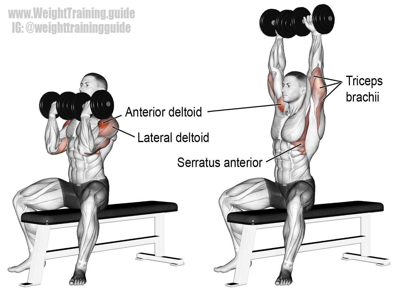 Arnold-press
