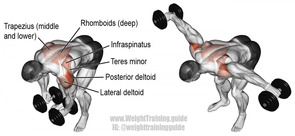 Dumbbell-Rear-Lateral-Raise-990x458
