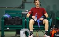 Andy Murray: Tôi không hiểu sao mình thất bại