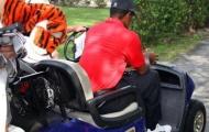 Tiger Woods rút khỏi WGC-Cadillac Championship Golf thế giới