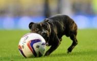 Video: Chó vào sân ghi bàn thắng (Everton vs Leayton Orient)