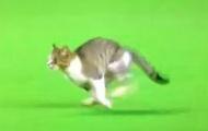 Video: Mèo chạy dọc đường biên