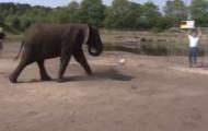 Video: Chú voi dự đoán Mỹ sẽ thắng ĐT Đức