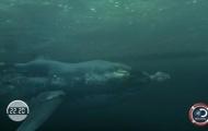 NÓNG: Phelps thất bại trước cá mập trắng dù được trang bị 'vũ khí' siêu hiện đại